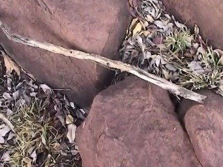 Sexy African whore tied and fucked hard in the wilderness