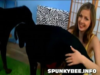 Spunky bee plays with dogs  free